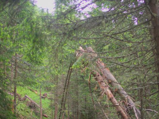 Goldberggruppe, Großfragant, Hohe Tauern, Rollbahnweg, Österreich