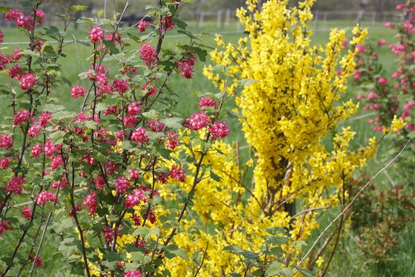 bunt, Farbe, Frühling, Garten, gelb, grün, rot, Schönfelder Hochland
